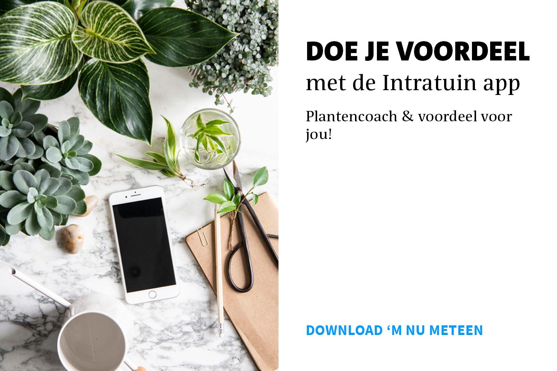 Intratuin-app_downloaden