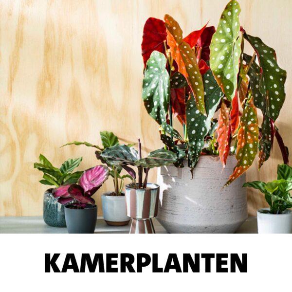 snel-link-kamerplanten