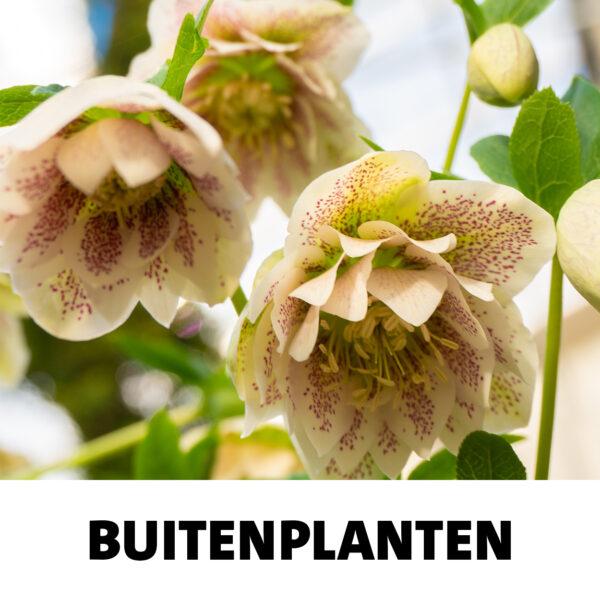 snel-link-buitenplanten